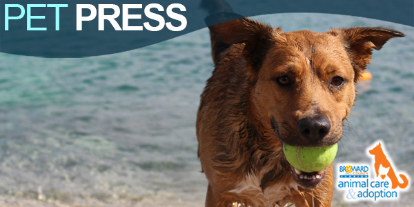 Pet Press - Dog with Tennis Ball