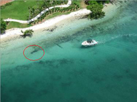 Close Encounter Between Boat and Manatee