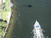 aerial view of manatee