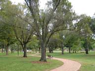 Park walkway with planted trees