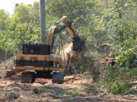 Exotic tree removal with heavy equipment