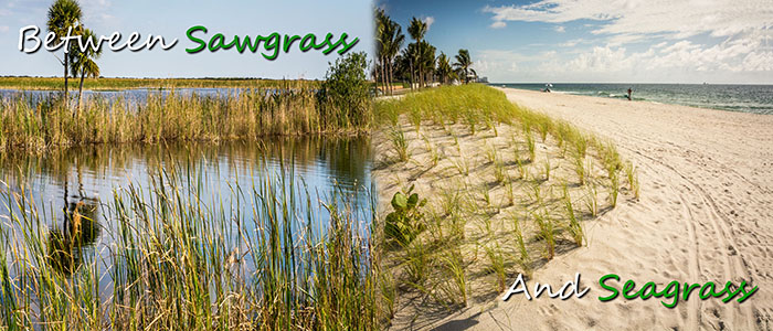 Sawgrass and Seagrass