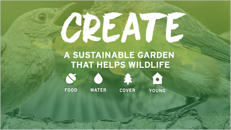Create a Sustainable Garden for Wildlife