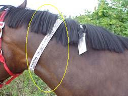 Attach a fetlock band with your name and address